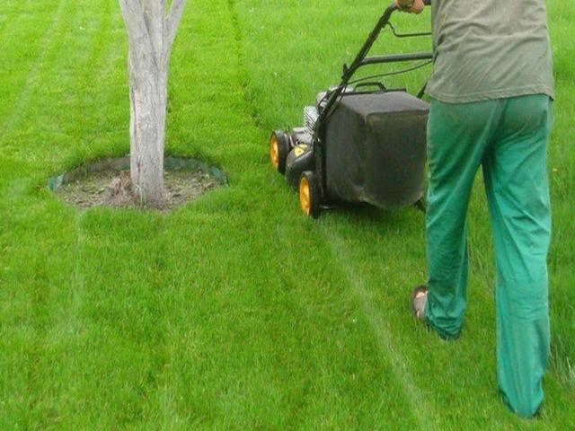Як посадити газонну траву своїми руками навесні для початківців