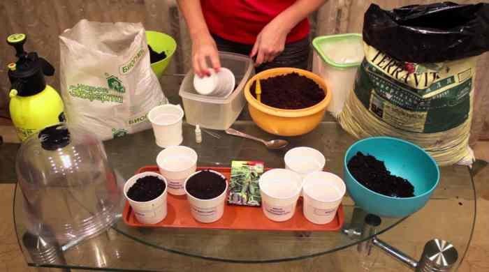 Як підготувати землю для розсади в домашніх умовах